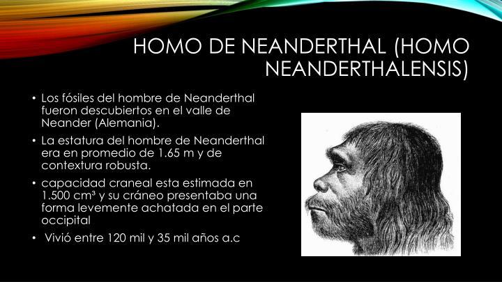 Homo de Neanderthal (Homo