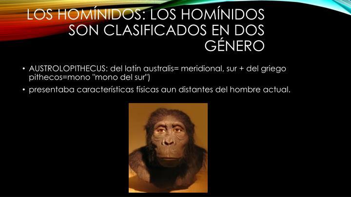 Los Homínidos: Los homínidos son clasificados en dos género