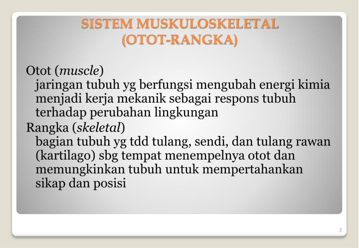 Otot (