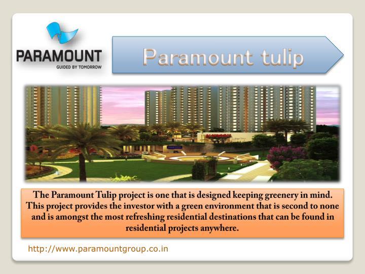 Paramount tulip