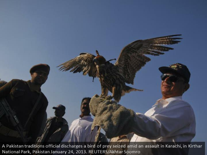 A Pakistan customs official releases a falcon seized during a raid in Karachi, in Kirthar National Park, Pakistan January 24, 2013. REUTERS/Akhtar Soomro
