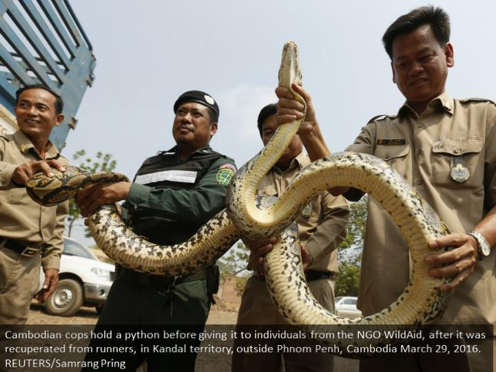 Cambodian police officers hold a python before handing it to members of the NGO WildAid, after it was recovered from smugglers, in Kandal province, outside Phnom Penh, Cambodia March 29, 2016. REUTERS/Samrang Pring
