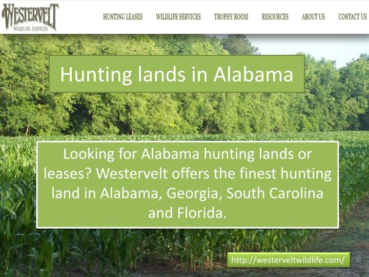 Hunting lands in alabama