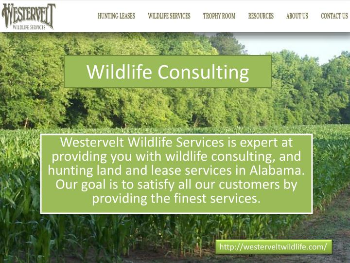 Wildlife consulting