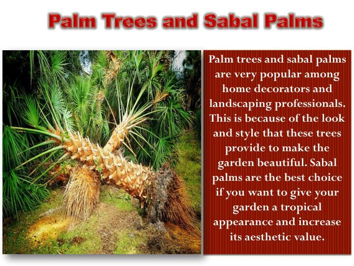 Palm trees and sabal palms