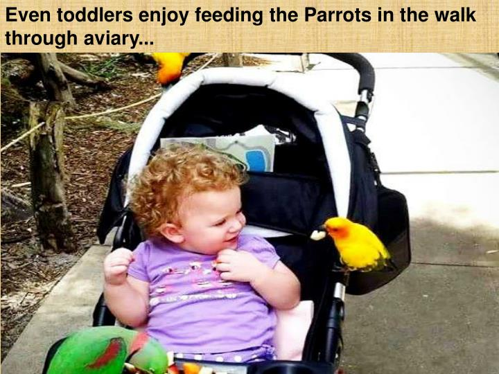 Even toddlers enjoy feeding the Parrots in the walk through aviary...