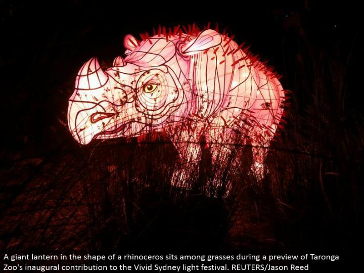 A monster lamp fit as a fiddle of a rhinoceros sits among grasses amid a sneak peak of Taronga Zoo's inaugural commitment to the Vivid Sydney light celebration. REUTERS/Jason Reed