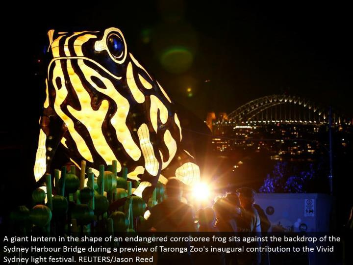 A monster lamp fit as a fiddle of an imperiled corroboree frog sits against the setting of the Sydney Harbor Bridge amid a sneak peak of Taronga Zoo's inaugural commitment to the Vivid Sydney light celebration. REUTERS/Jason Reed