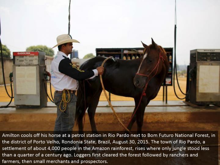 Amilton chills his steed at a petrol station in Rio Pardo beside Bom Futuro National Forest, in the locale of Porto Velho, Rondonia State, Brazil, August 30, 2015. The town of Rio Pardo, a settlement of around 4,000 individuals in the Amazon rainforest, rises where just wilderness stood not exactly a fourth of a century back. Lumberjacks initially cleared the woodland took after by farmers and agriculturists, then little vendors and prospectors.