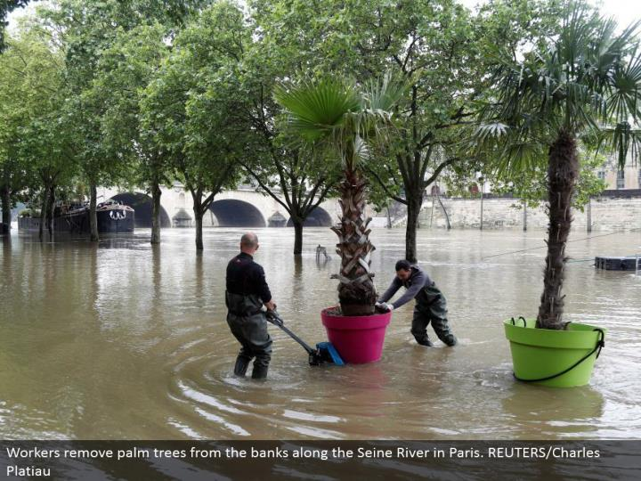 Workers expel palm trees from the banks along the Seine River in Paris. REUTERS/Charles Platiau