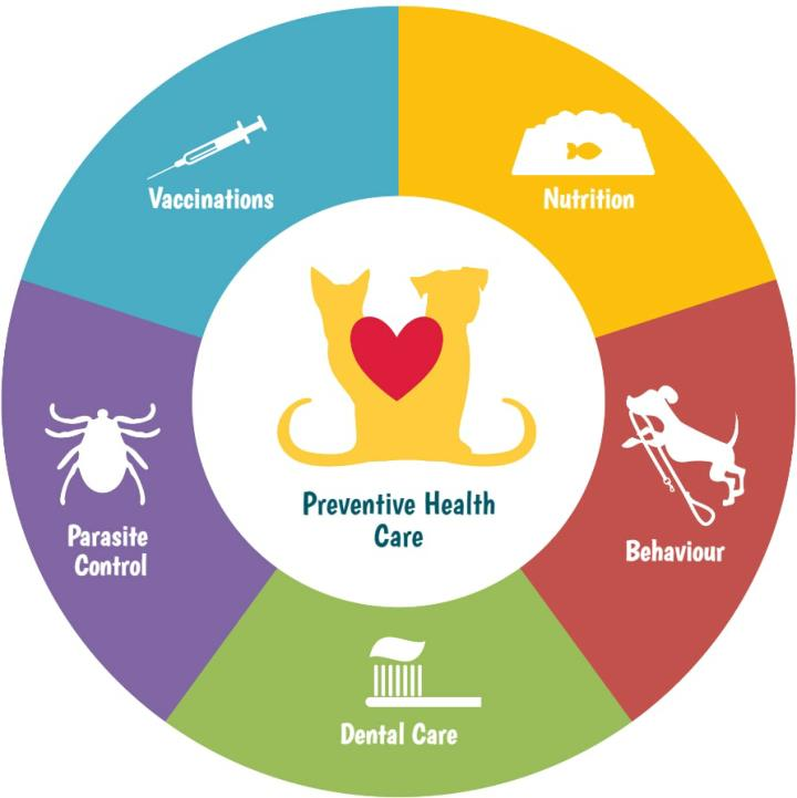 Vancouver animal hospital components of preventive pet healthcare