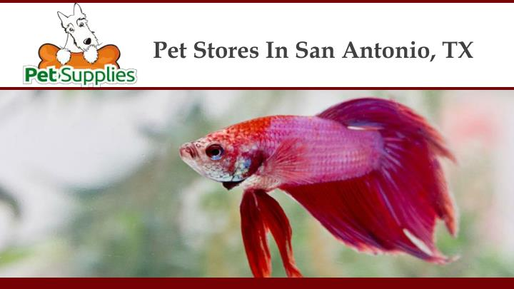 Pet Stores In San Antonio, TX
