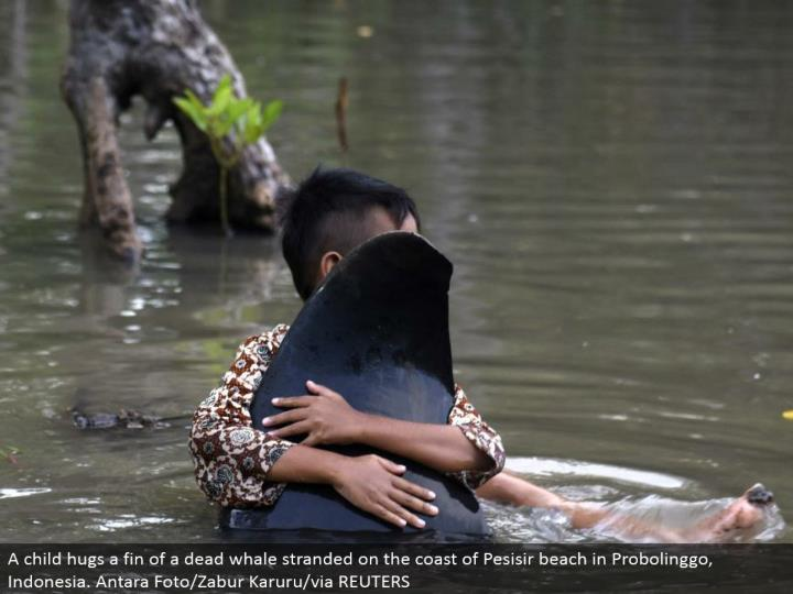 A youngster embraces a balance of a dead whale stranded on the shoreline of Pesisir shoreline in Probolinggo, Indonesia. Antara Foto/Zabur Karuru/by means of REUTERS