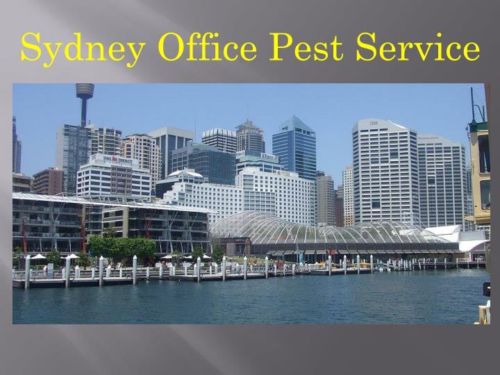 Sydney Office Pest Service