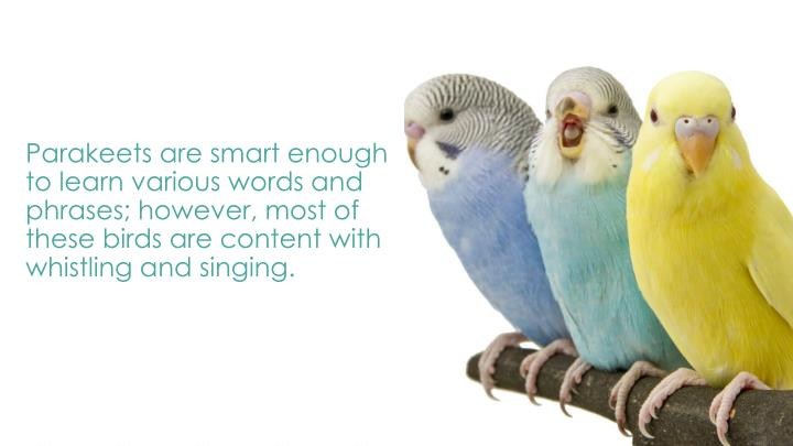 Parakeets are smart enough