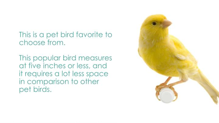 This is a pet bird favorite to