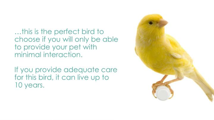 …this is the perfect bird to