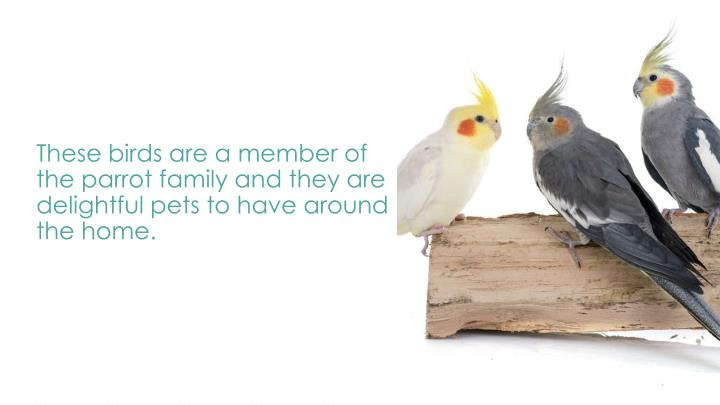 These birds are a member of