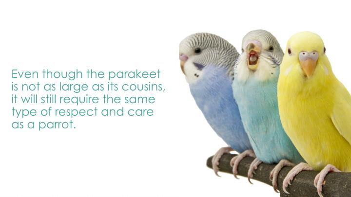 Even though the parakeet