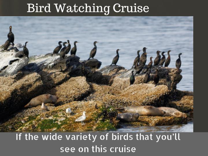 Bird Watching Cruise