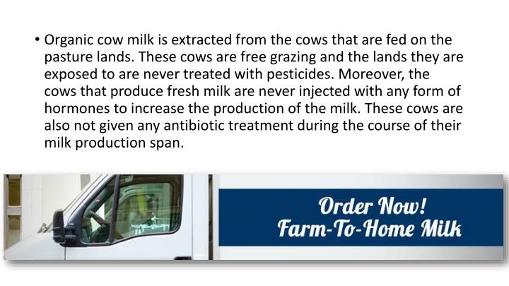 Organic cow milk is extracted from the cows that are fed on the pasture lands. These cows are free grazing and the lands they are exposed to are never treated with pesticides. Moreover, the cows that produce fresh milk are never injected with any form of hormones to increase the production of the milk. These cows are also not given any antibiotic treatment during the course of their milk production span.