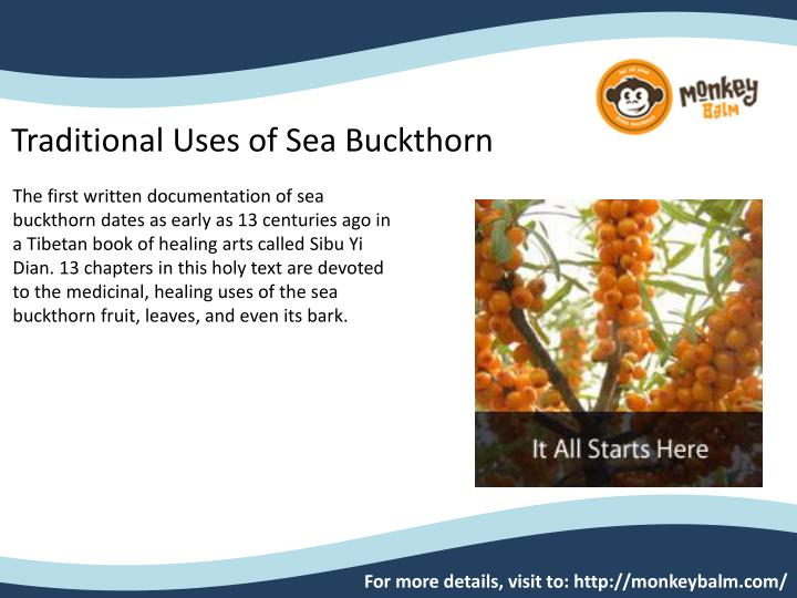 Traditional Uses of Sea Buckthorn
