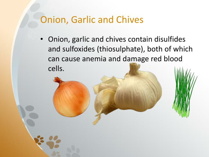 Onion, Garlic and Chives