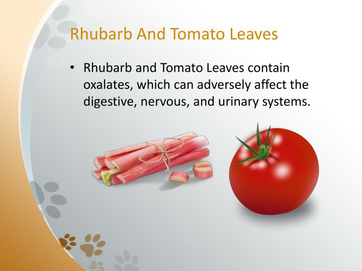 Rhubarb And Tomato Leaves