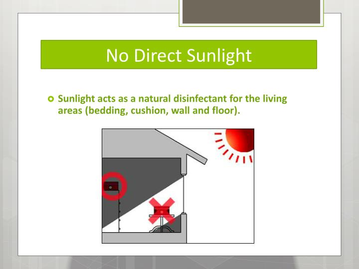 No direct sunlight
