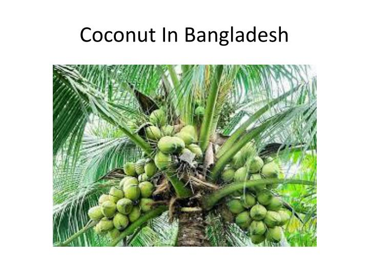 Coconut In Bangladesh