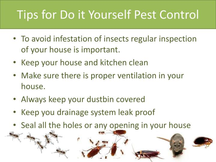 Tips for Do it Yourself Pest Control