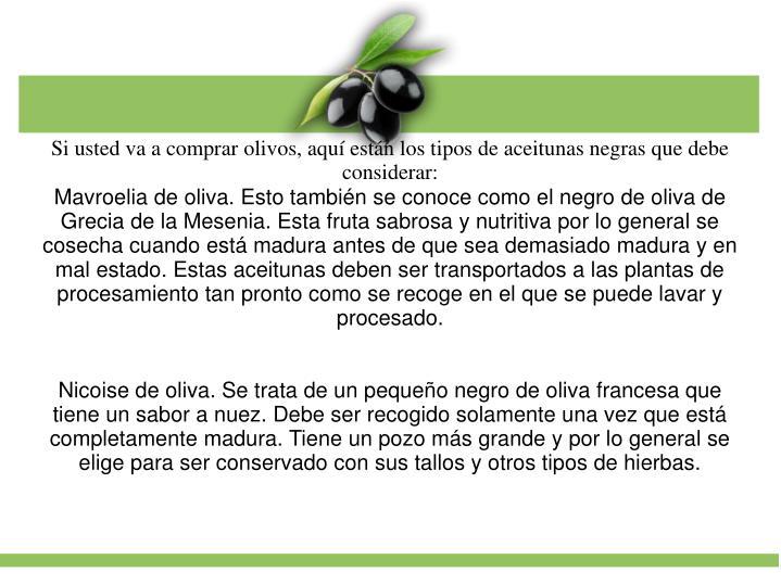 Mavroelia de oliva. Esto tambin se conoce como el negro de oliva de Grecia de la Mesenia. Esta fruta sabrosa y nutritiva por lo general se cosecha cuando est madura antes de que sea demasiado madura y en mal estado. Estas aceitunas deben ser transportados a las plantas de procesamiento tan pronto como se recoge en el que se puede lavar y procesado.