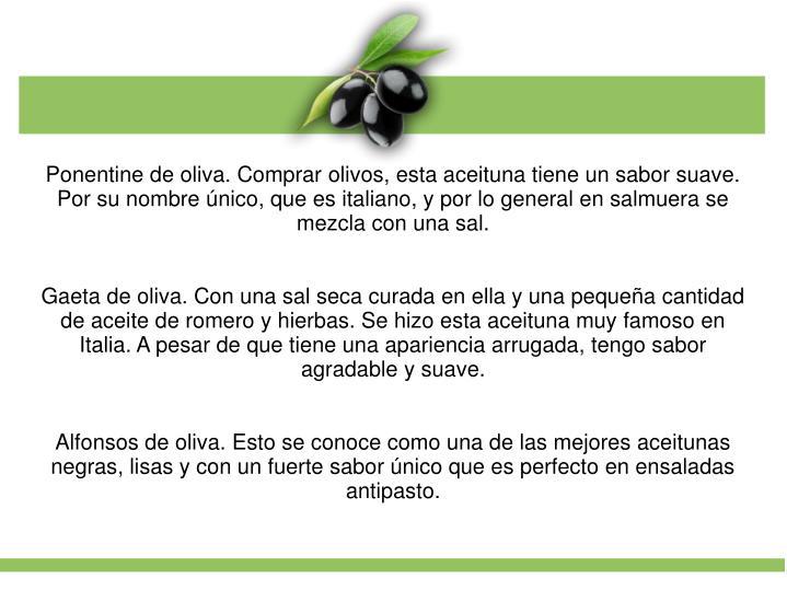 Ponentine de oliva. Comprar olivos, esta aceituna tiene un sabor suave. Por su nombre único, que es italiano, y por lo general en salmuera se mezcla con una sal.