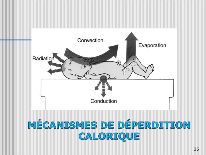 MÉCANISMES DE DÉPERDITION CALORIQUE