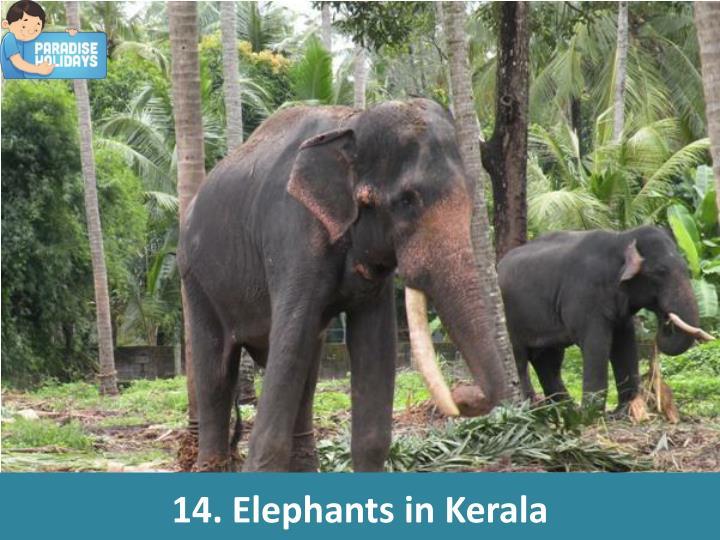 14. Elephants