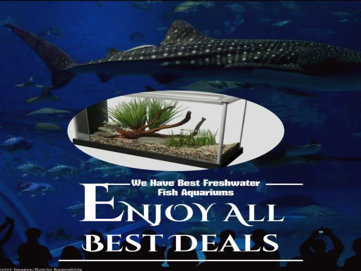 When to shop for tropical fish aquariums