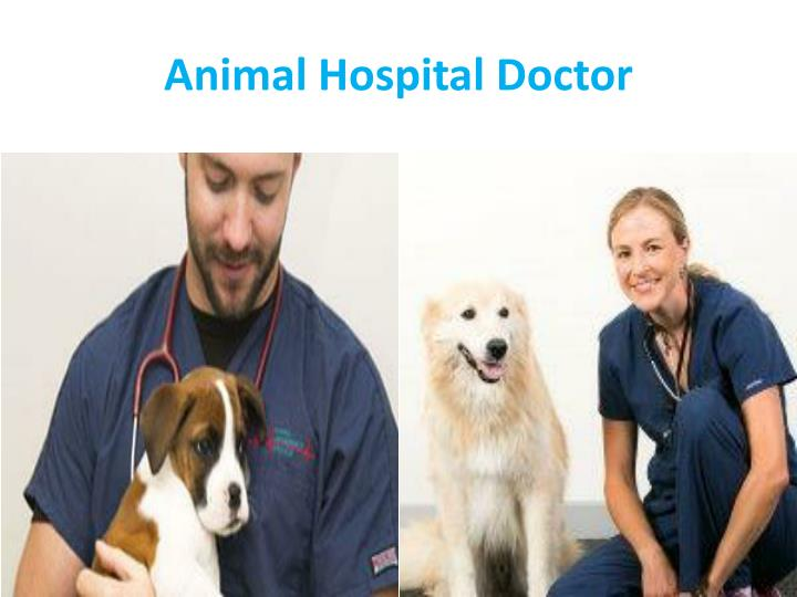 Animal Hospital Doctor