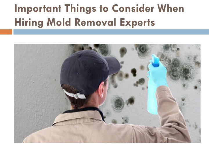 Important things to consider when hiring mold removal experts