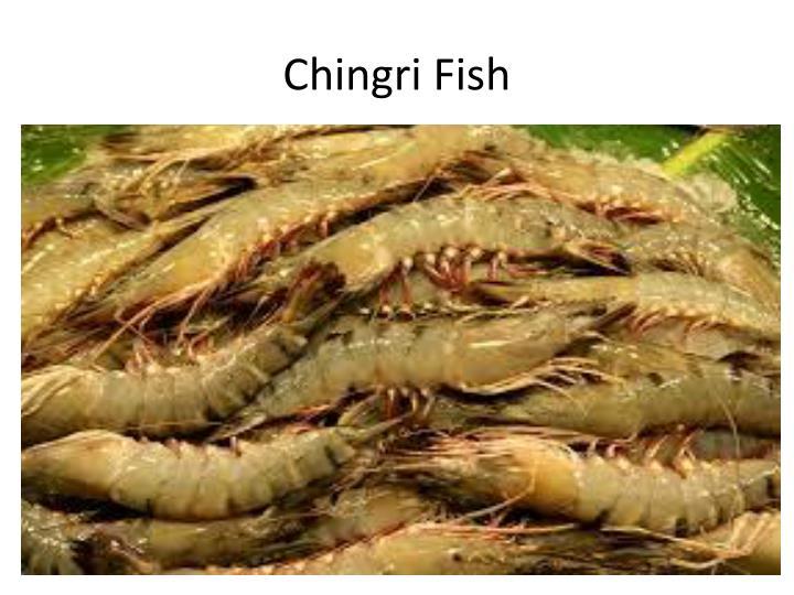 Chingri