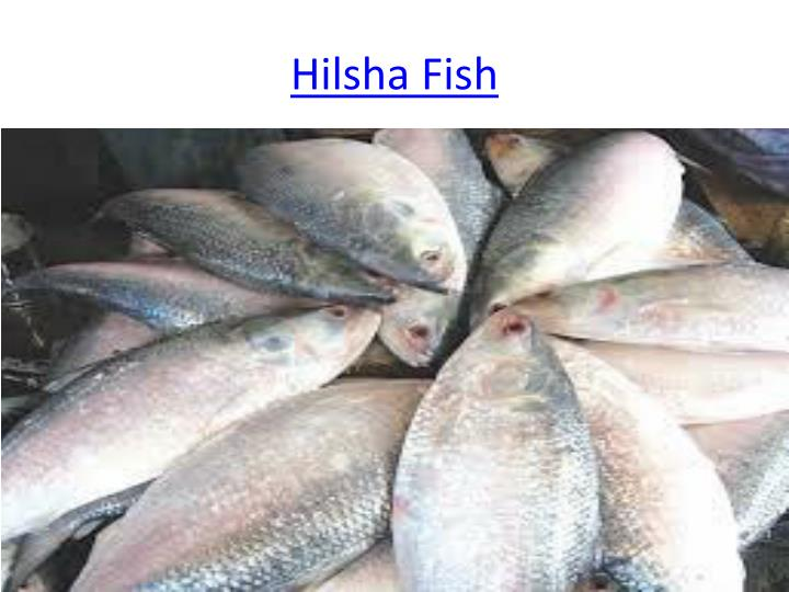Hilsha
