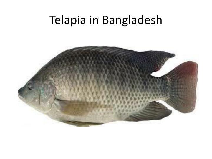 Telapia