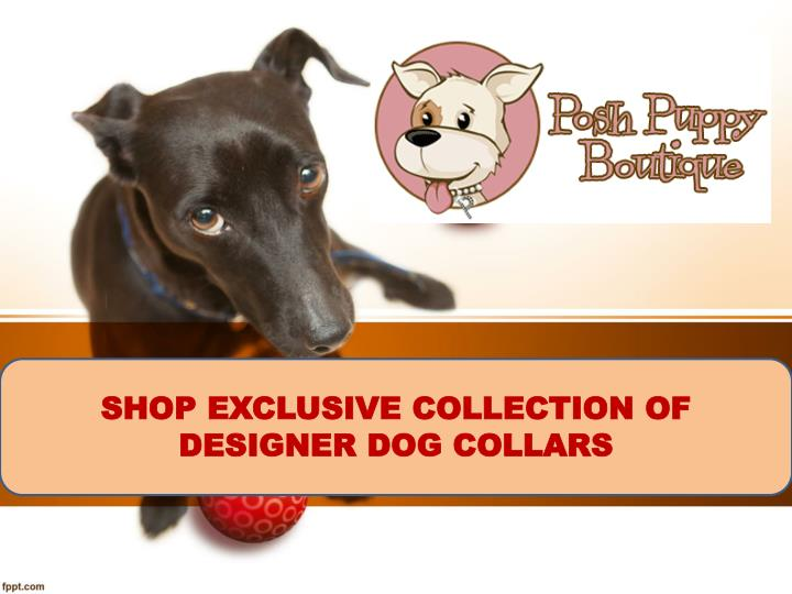 SHOP EXCLUSIVE COLLECTION OF  DESIGNER DOG COLLARS