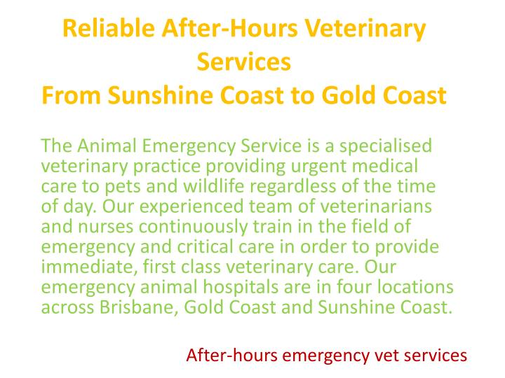 Reliable After-Hours Veterinary