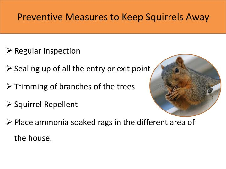 Preventive Measures to Keep Squirrels Away