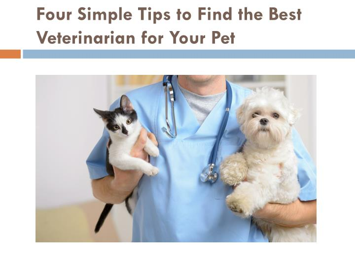 Four simple tips to find the best veterinarian for your pet