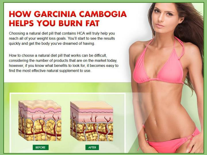 How garcinia cambogia helps to burn fat garciniacambogiaonlinestore