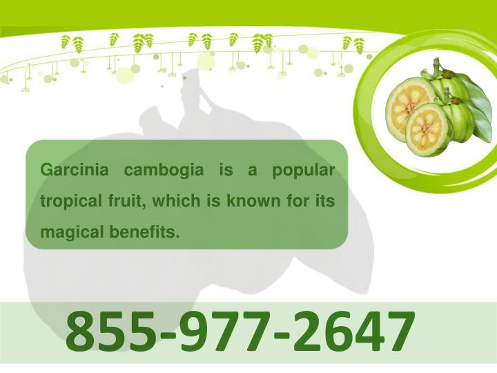 Garcinia cambogia is a popular tropical fruit, which is known for its magical benefits.