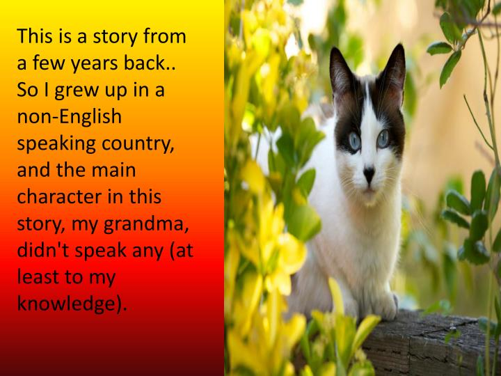 This is a story from a few years back.. So I grew up in a non-English speaking country, and the main...