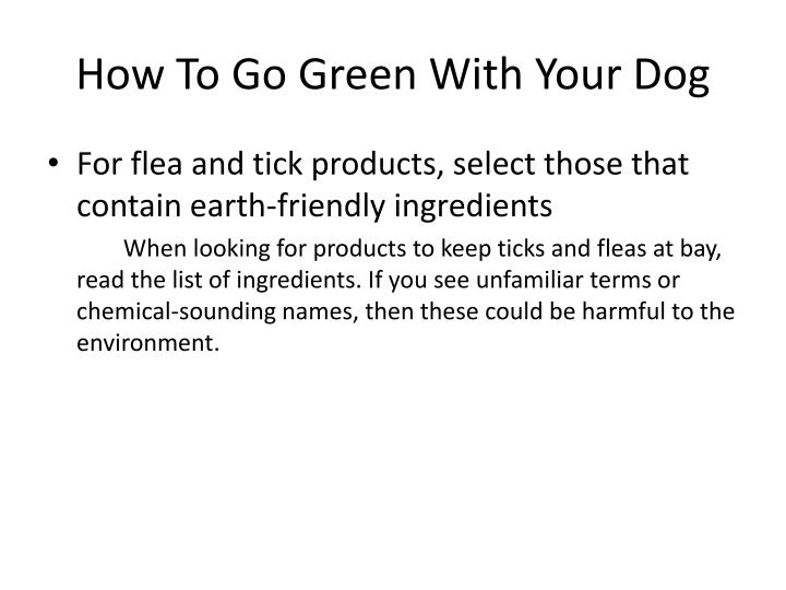 How To Go Green With Your Dog