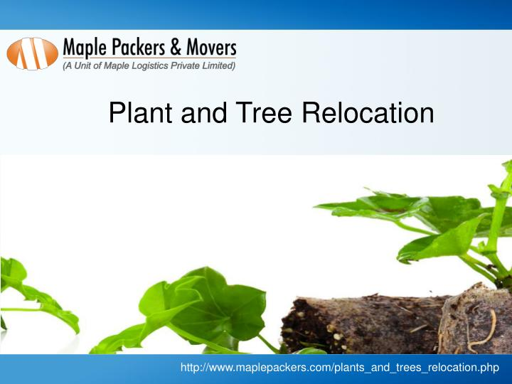 Plant and Tree Relocation